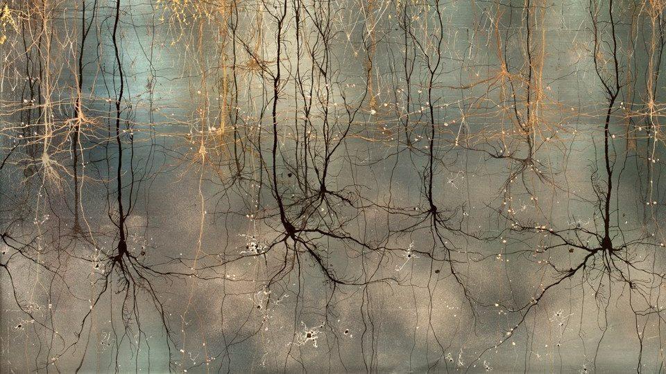 <a href='http://www.gitim.it/neuroscienze-e-psicoterapie.html'>Neuroscienze  e psicoterapie</a><br /><span>prof Carlo Cristini - Università degli Studi di Brescia 25 febbraio 2017</span>